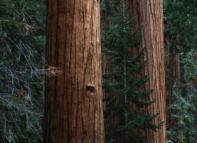 Определить дерево по коре фото %