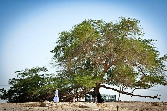 Чудо природи: дев'ять самих дивовижних дерев на планеті (ФОТО)