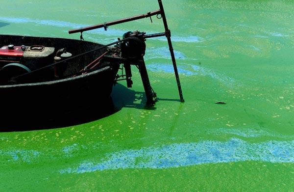 Озеро Чаоху в Хефей, центральної провінції Китаю Аньхой, покрилося квітучими зеленими водоростями. Фото: AFP/Getty Images