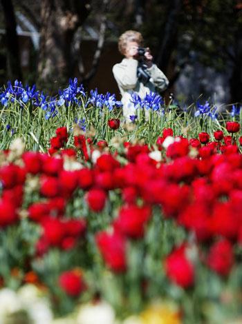 Фестиваль цветов в Австралии. Фото: Graham Denholm/Getty Images