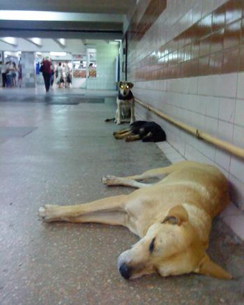 Спящие собаки в подземном переходе Харькова. Фото: Юлия Ламаалем/The Epoch Times