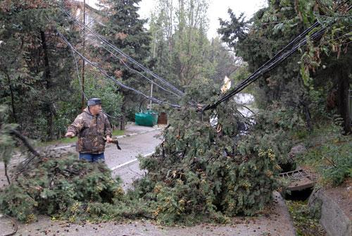 Работник МЧС убирает дерево, свалившееся на линию электропередач во время шторма 11 ноября в Алуште. Фото: Владимир Бородин/Великая Эпоха