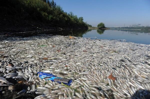 Загибла риба у річці міста Шеньяна. Фото з epochtimes.com