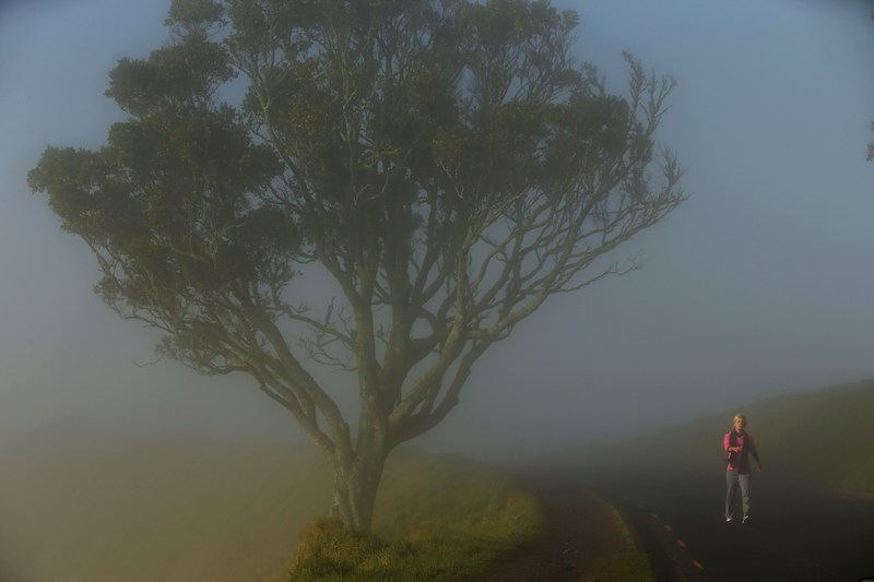 Окленд, Новая Зеландия, 6 июля. Город окутал сильный туман, из-за чего пришлось отменить утренние авиарейсы. Фото: Phil Walter/Getty Images