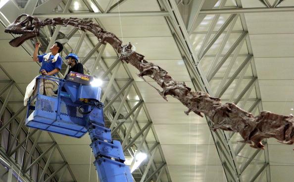 Робітник монтує експонат 'Виставки динозаврів 2009'.Японія, Чібу. 13 липня 2009р. Фото: Junko Kimura/getty Images