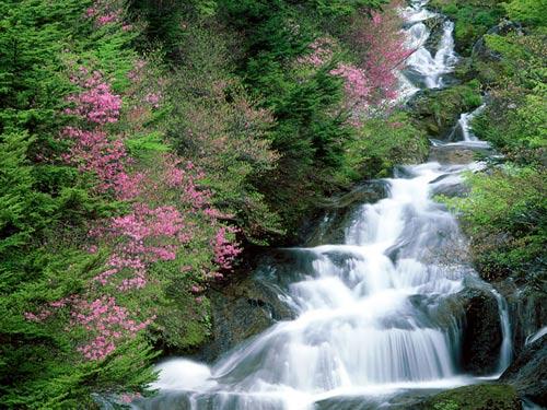 Горная речка, префектура Tochigi, Nikko, Япония