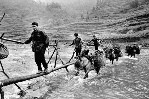 На ослах перевозят уголь. Провинция Юньнань. 2001 год. Фото: Geng Yunsheng