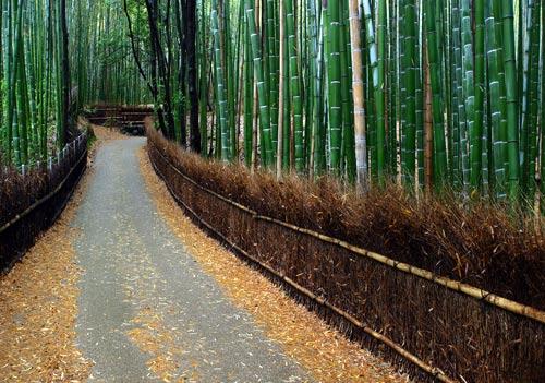 Дорога, ведущая через бамбуковый лес, Япония.