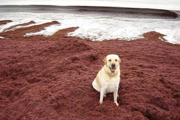 Пляж Kaihalulu. Фото: life.pravda.com.ua
