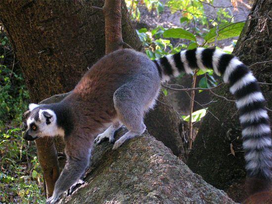 острів Мадагаскар фото