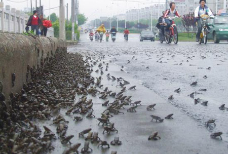 Жабы убегают от неизвестного бедствия. Фото с aboluowang.com