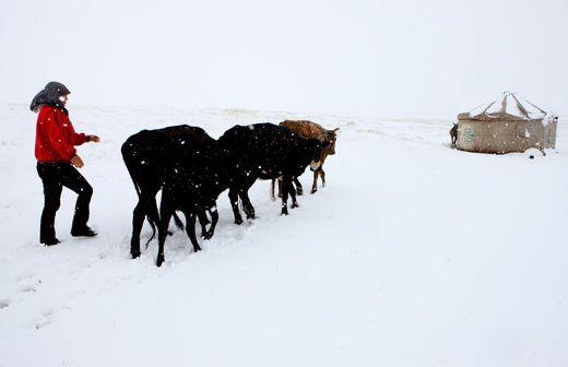 На северо-западе Китая выпал снег. 18 июня 2009 г. Город Хами. Синьцзян. Фото с secretchina.com