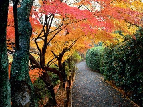 Парк в Киото. Япония