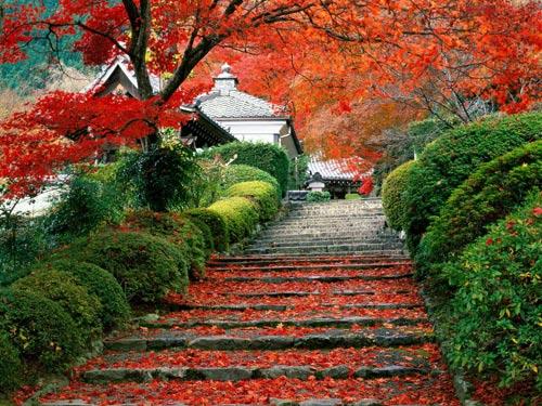 Сад (Garden Staircase) в Киото. Япония