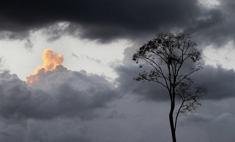 Штат Пара, Бразилия, 11 июня. В бассейне Амазонки может возобновиться массовая вырубка «лёгких планеты» — ливневых лесов — с принятием поправок к лесному кодексу страны. Фото: Mario Tama/Getty Images