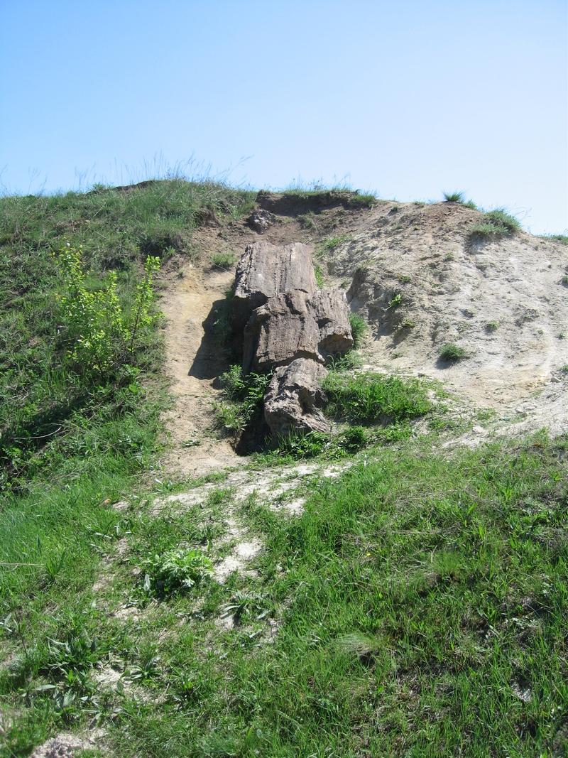 Самый большой ствол окаменелого дерева, расположенный, в конце карьера с правой его стороны. Фото: Милостнова Росина/ The Epoch Times Украина