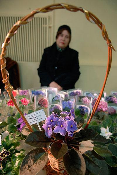 Виставка кімнатних фіалок (сенполій) відкрилася в Києві 11 лютого 2010 року. Фото: Володимир Бородін/The Epoch Times