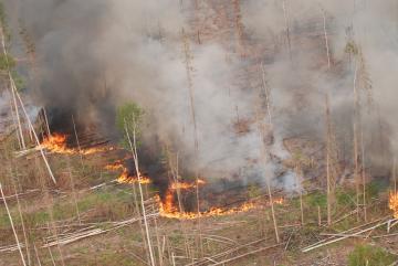 Величезна площа лісу охоплена вогнем у Красноярському краї