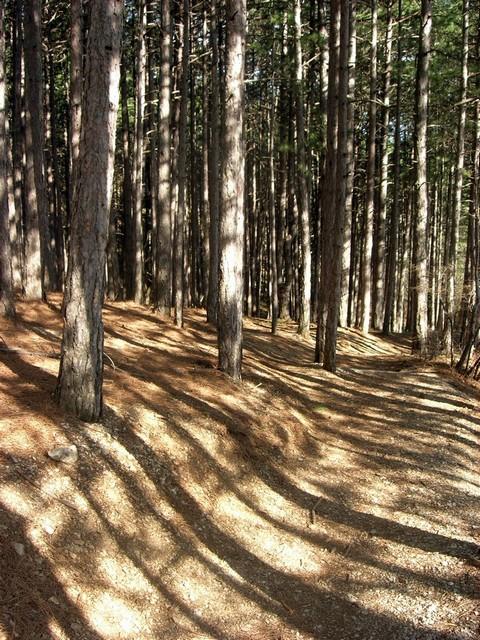 «Полосатая» тропа на закате. Фото: Алла Лавриненко/EpochTimes.com.ua