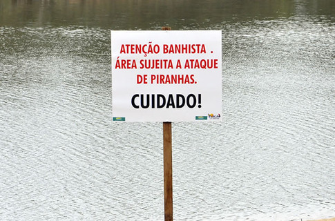 Пираньи атаковали туристов на бразильских пляжах. Фото: G1