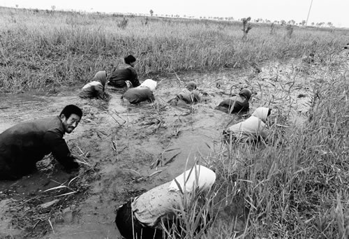 Люди ловят речных крабов на отмели реки Хуанхэ. Провинция Шаньдун. 1999 год. Фото: Huan Lipin