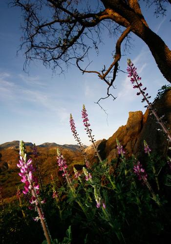 Каліфорнія. Фото: David McNew / Getty Images