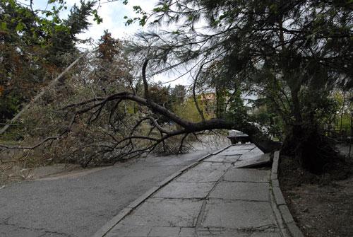 Дерево, упавшее на дорогу во время шторма в Алуште. Фото: Владимир Бородин/Великая Эпоха