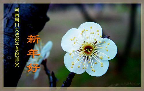Поздоровлення від послідовників «Фалуньгун» м. Чжоукоу провінції Хенань. Фото з minghui.org