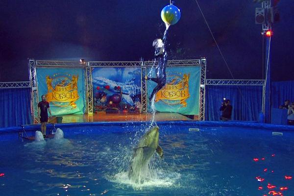 Дельфінарій працює в Києві. Фото: ntdtv