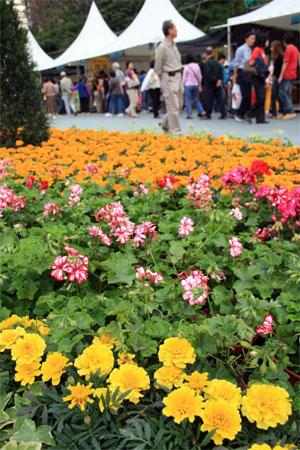 Бархатки и пеларгонии на ежегодной Гонконгской выставке цветов. Фото: У Лянью/Великая Эпоха