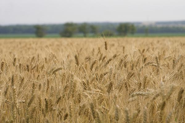 Украина готовится вступить в организацию «Зерновая двадцатка»
