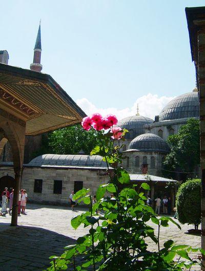 Розы возле Софии. Фото: Ирина Рудская. The Epoch Times