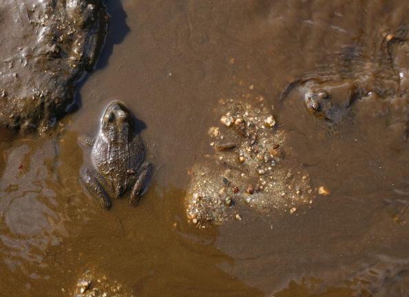 Фермы по выращиванию и переработке лягушек. Провинция Цзилинь. Фото: China Photos/Getty Images