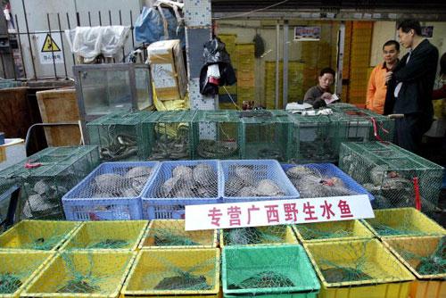 Продавець риби м. Шеньчжень пров. Гуандун. Фото: AFP/AFP/Getty Images