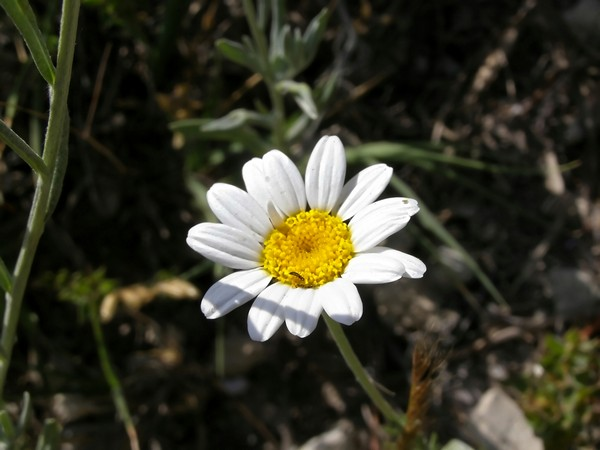 Кримські квіти. Фото: The Epoch Times