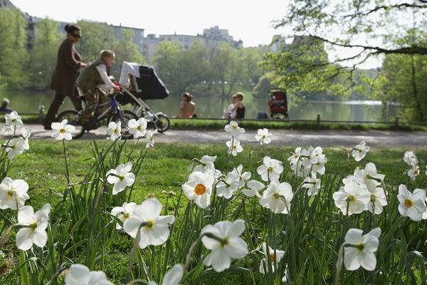 Весенние цветы в Берлине, Германия. Фото: Andreas Rentz/Getty Images