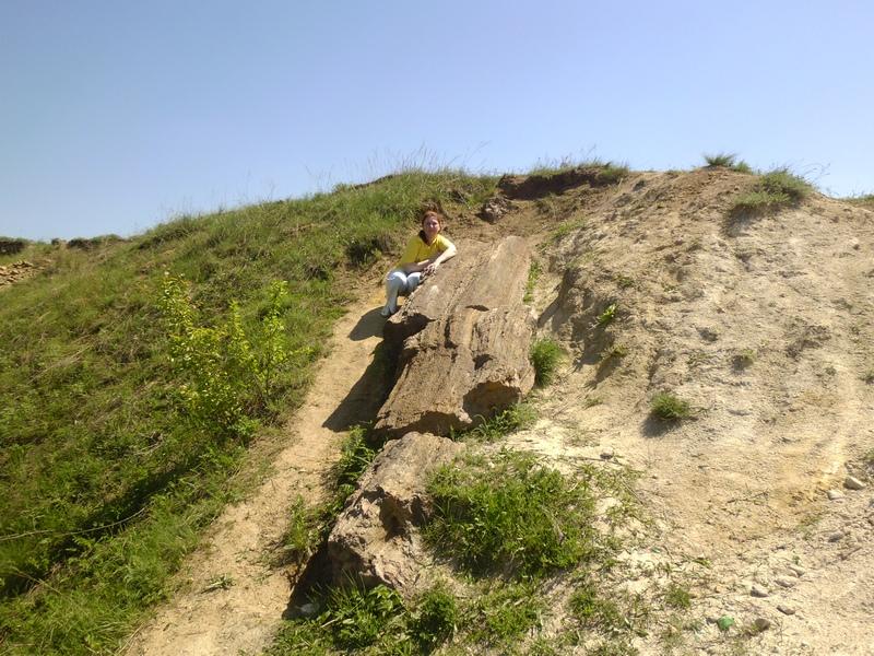 Самый большой ствол окаменелого дерева, расположенный, в конце карьера с правой его стороны. Фото: Игорь Изевлин/The Epoch Times Украина