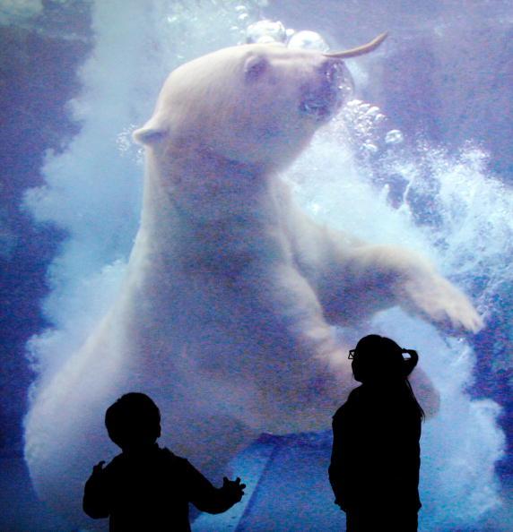 У Токіо показують зображення тварин з використанням 3D технологій. Фото: TORU YAMANAKA / AFP / Getty Images