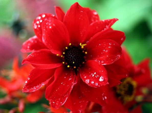Виставка квітів Королівського садівницького товариства. Фото: Christopher Furlong/Getty Images