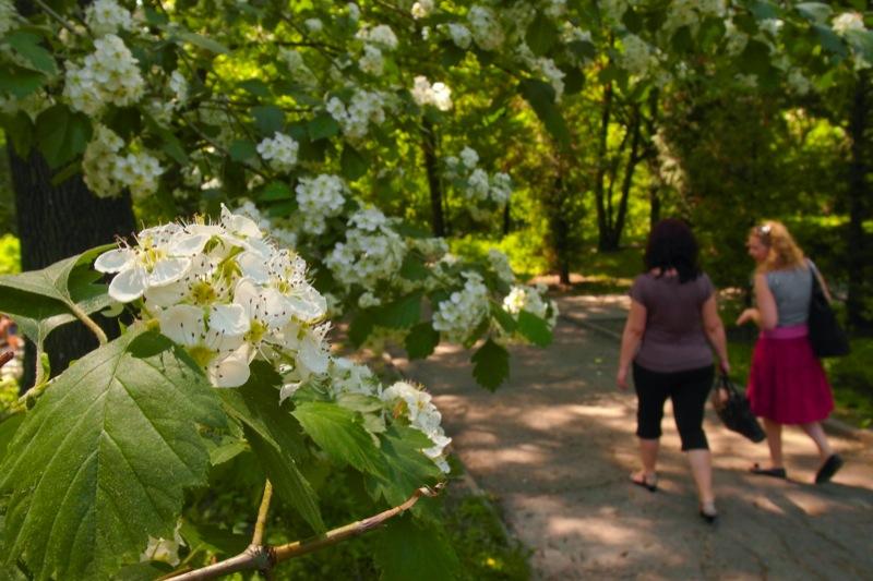 Все растения зацвели одновременно из-за ранней жары. Фото: Владимир Бородин / The Epoch Times Украина