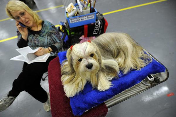 Выставка собак в Нью-Йорке. Фото: TIMOTHY A. CLARY/AFP/Getty Images