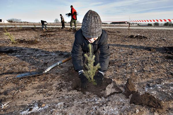 Школяр Крістіан саджає дерево у мерзлу землю біля міста Драструпа в Ютландії, (півострів Данії). Це частина проекту «Засадимо планету», ініційованого в країні перед майбутнім самітом у Копенгагені з приводу зміни клімату. Фото: HENNING BAGGER / AFP / Gett
