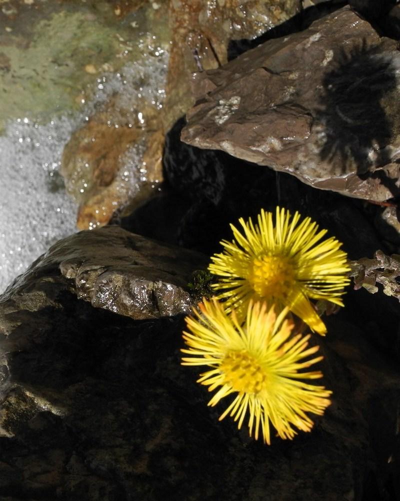 Горная река Водопадная. Фото: Алла Лавриненко/EpochTimes.com.ua