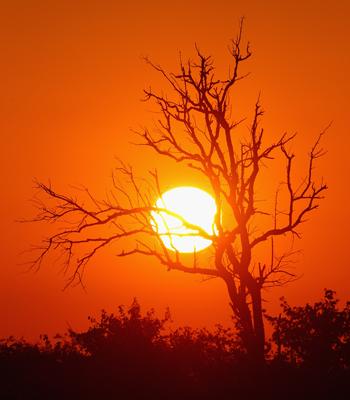 Схід сонця. Фото: Cameron Spencer / Getty Images