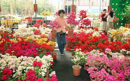 Тайвань. Тайбэй. Рынок по продаже цветов. Фото: Patrick Lin/AFP