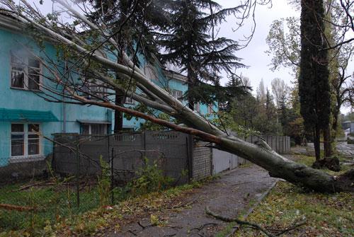 Дерево, упавшее на дом во время шторма в Алуште. Фото: Владимир Бородин/Великая Эпоха