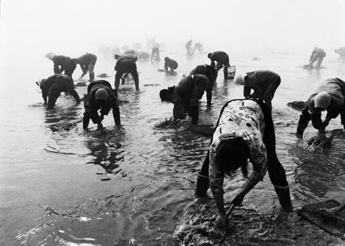 После отлива женщины собирают устриц. Город Далянь провинции Ляонин. 2001 год. Фото: Jiang Zhenqing