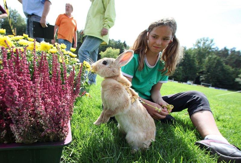 Меліса Байєр і її кролик на змаганнях вже втретє. Фото: Ralph Orlowski/Getty Images