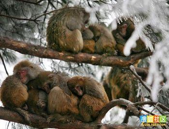 Через затяжне стихійне лихо великі втрати несе і лісове господарство Китаю. Фото: secretchina.com
