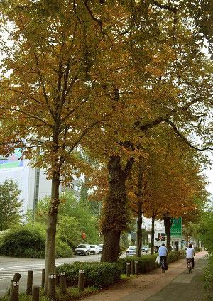 Кельнські дерева восени. Фото: Майкл Озакі/Велика Епоха